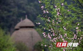 张家界黄龙洞景区:春光四溢 色彩斑斓