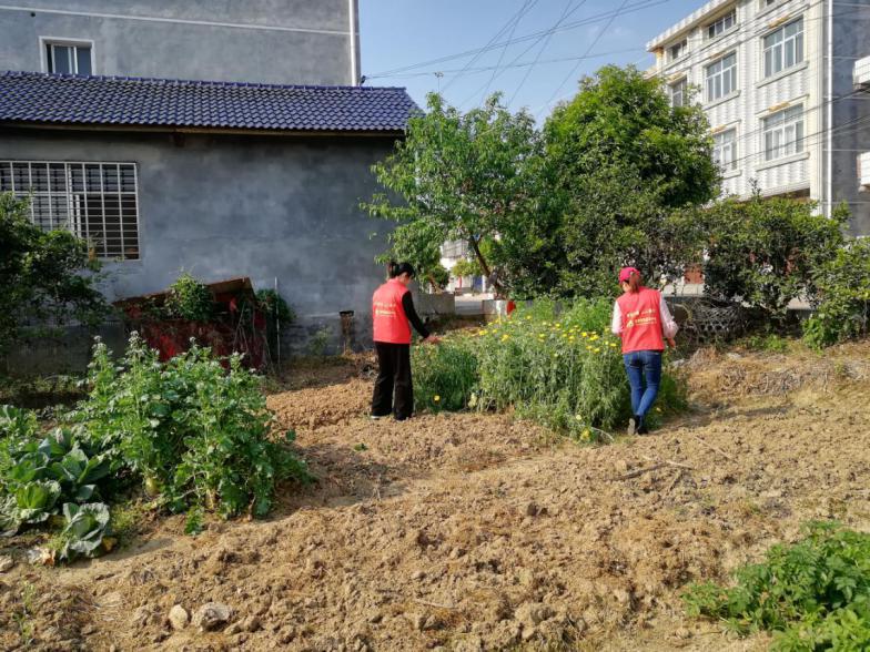 """宝峰街道月亮山社区:""""四步""""工作法 确保毒品原生植物零种植"""