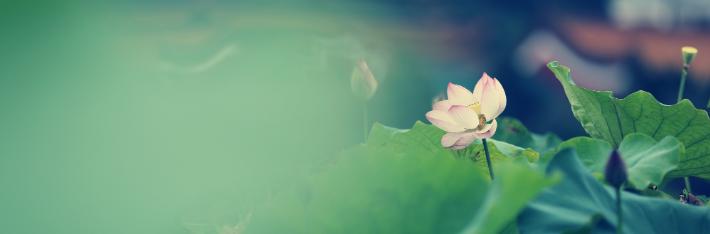 南岳:又见荷花朵朵开