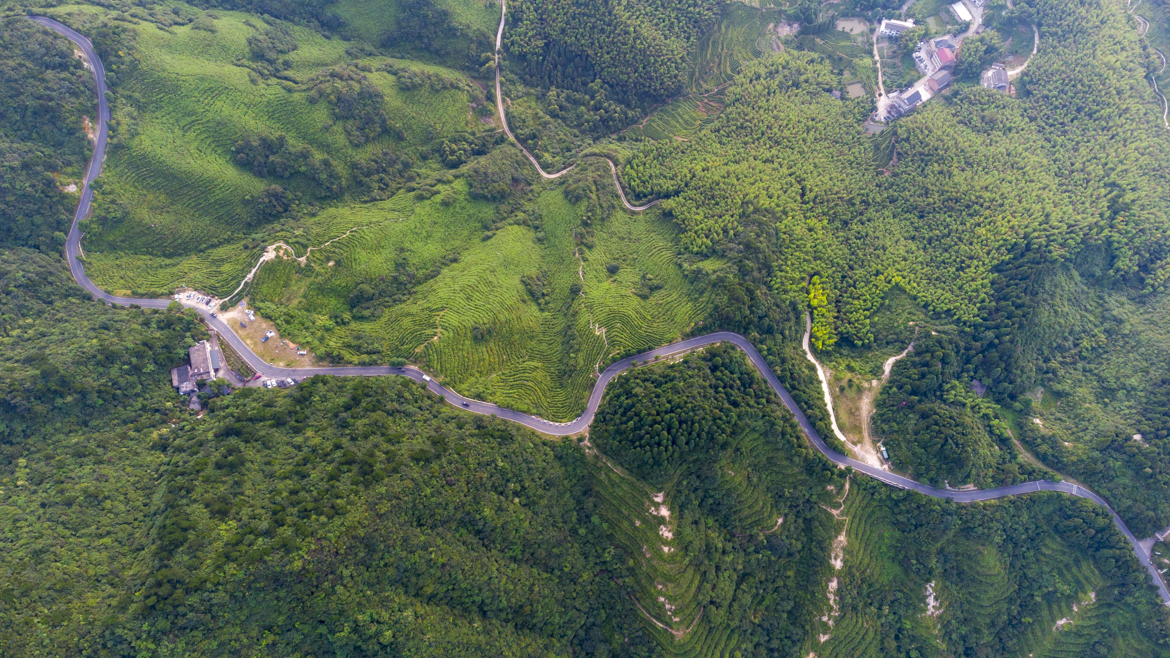 景区公路两旁茶树连绵不断,沿山皆茶 (2).jpg