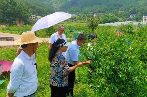 开展农业技术培训 助推乡村经济发展