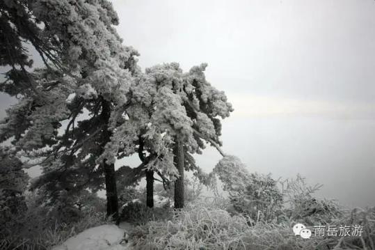 读完这15句,你就读懂了南岳的冬 | 南岳雾凇征文精选第2辑