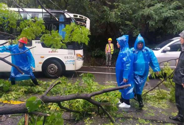 东阳渡街道紧急清理倒塌树木    保障107国道安全畅通