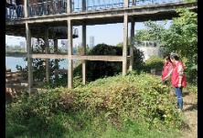 冶金街道开展河段清理工作,保证区域河段卫生清洁