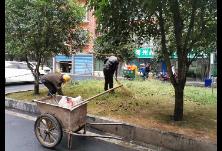 王江社区开展环境卫生整治专项行动