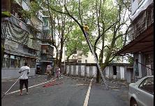 苏洲湾社区清理枯树,消除安全隐患