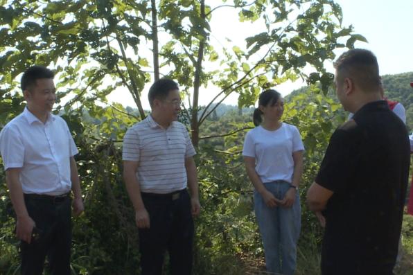 羅衛華:全力以赴做好油茶收摘秩序維護工作 推進油茶產業高質量發展