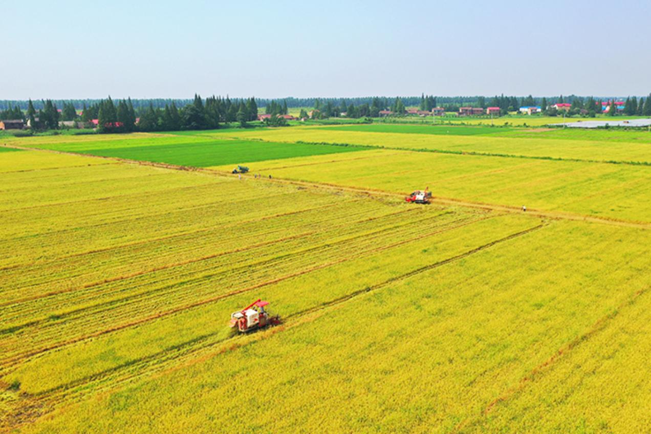 【学党史办实事】湖南沅江:农技指导保丰收 晚稻生产再接力