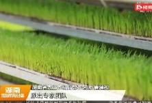 """湖南150万台农机""""闹春"""""""