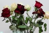 鲜花保鲜三要素:养分 杀菌 促进吸收