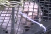 四川成都:150多只活体猫狗被打包邮寄