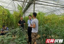 湖南省农业农村厅到湘西州开展农产品质量安全飞行检查