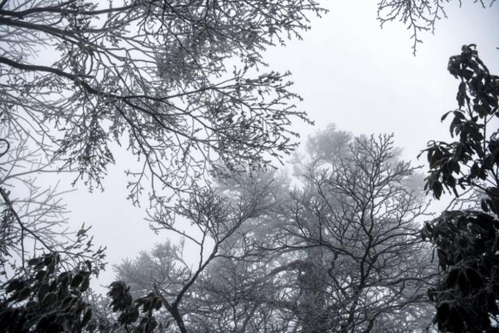 张家界:降雨降温 天门山景区春季雾凇景观宛如仙境