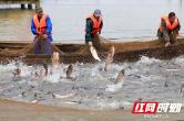 常德津市:鱼味无穷庆丰收