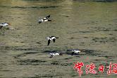 喜讯!湖南石门仙阳湖国家湿地公园通过验收