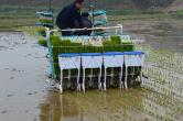 省肥省工还环保——侧深施肥技术助力我国水稻绿色高效生产