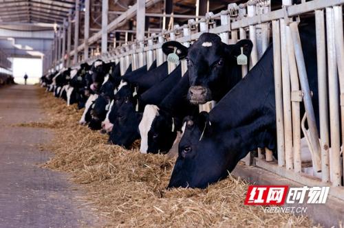 保健康 抗疫情 优卓一季度生产鲜奶240吨以上 配送超3.6万瓶