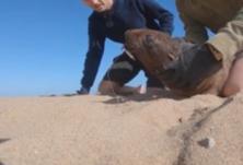 海豹被废弃鱼钩穿唇 两男子急忙救助