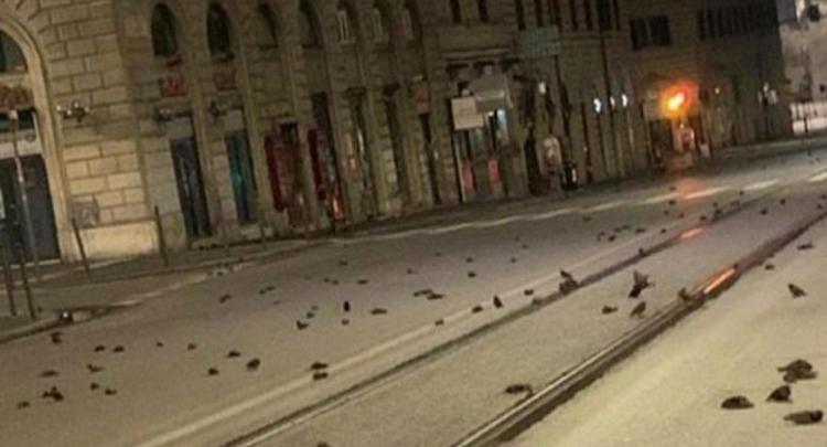 疑受跨年烟花惊吓 意大利数百只鸟惨死街头