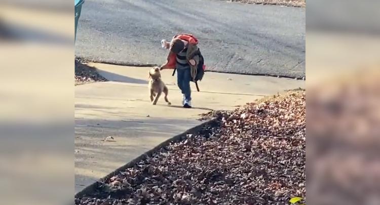 小狗狗+小朋友=双倍小可爱