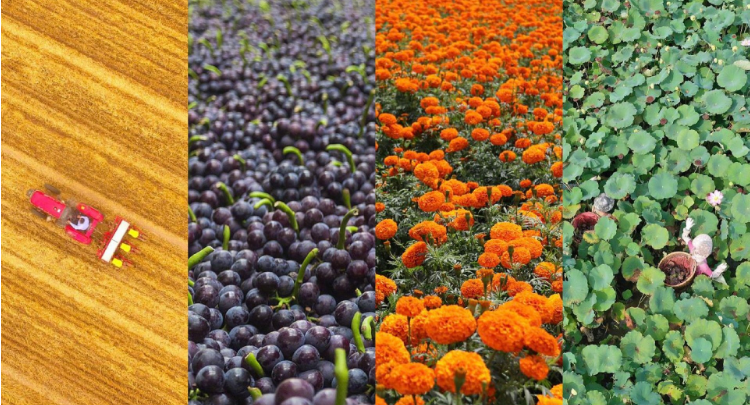 收获的季节!70秒看中华大地丰收图景