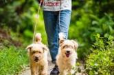 长沙这8个地方可免费领养犬只