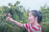 """扶贫印记·Vlog丨衡南六合村""""乘风破浪的姐姐""""邀你7月摘黄桃"""