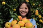 在家种黄桃一年赚十几万 湖南农业产业化带动更多乡村贫困户脱贫