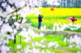 清明小长假赏花踏春去哪玩 长沙将推出18个文旅活动