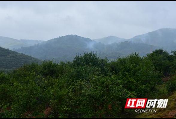 湖南茶油品牌建设新探索:神农国油品牌高级定制中心正式启动