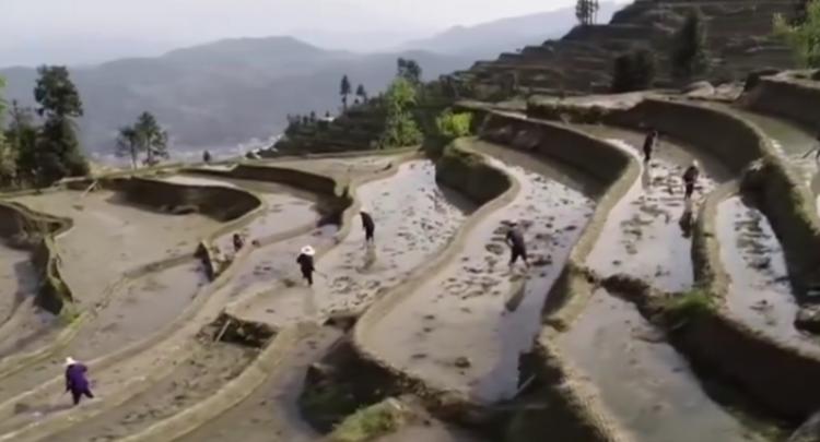 湖南各地:气温回暖 水稻种植正当时