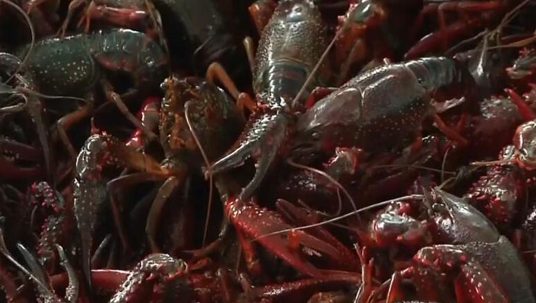 湖南一季度小龙虾及制品出口同比增长4.7倍