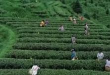 """农家有好货 """"芒果扶贫云超市""""走进宜章 助推农产品销售"""