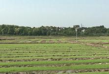 确保粮食和重要副食品供应安全 胡春华在广东、湖南实地督导春耕和生猪生产工作