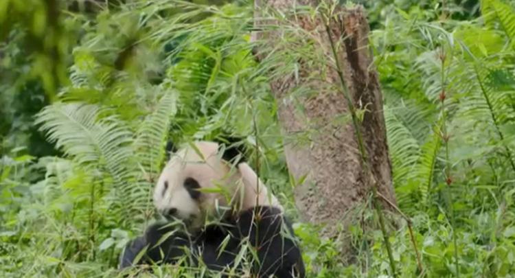 《中国的生物多样性保护》白皮书发布