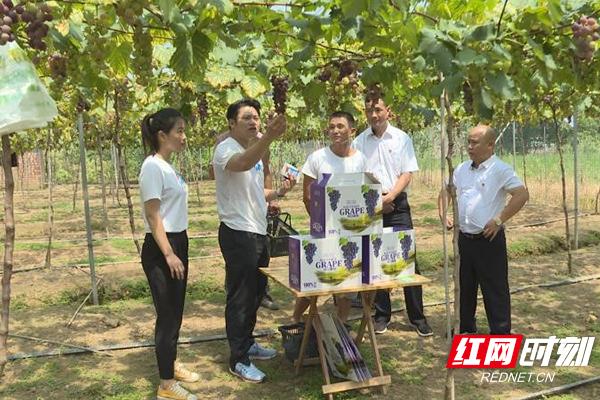 茶陵虎踞二仙村:第一书记直播间带货 助农增收促扶贫消费