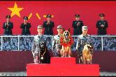 《战犬》 军旅版忠犬八公 8月1日催泪上映