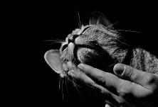 芙蓉·散文 | 龚曙光:猫和尼姑