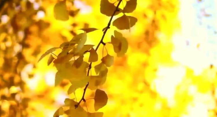 视频   这一抹秋色,温暖了山川与岁月