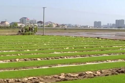 岳阳:保障春耕扩面提质 加快生猪复产增养