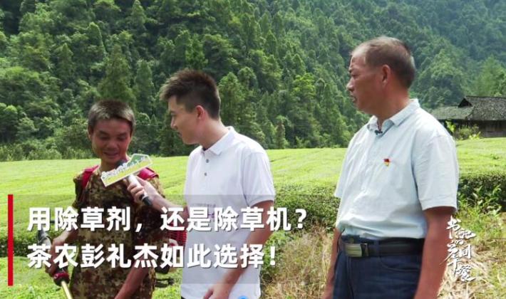 除草剂还是除草机?石门薛家村茶农给记者算了一笔账!