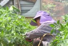 湖南农业加快绿色转型 扩大绿色优质农产品供给