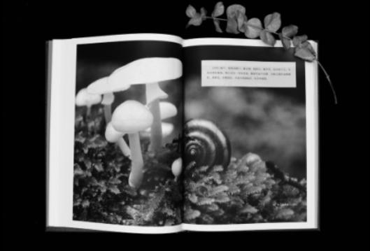 《山林笔记》:长白山滤出的文学精品