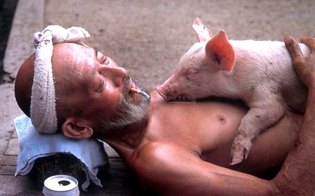 与猪共生 超有爱的养猪大爷.jpg