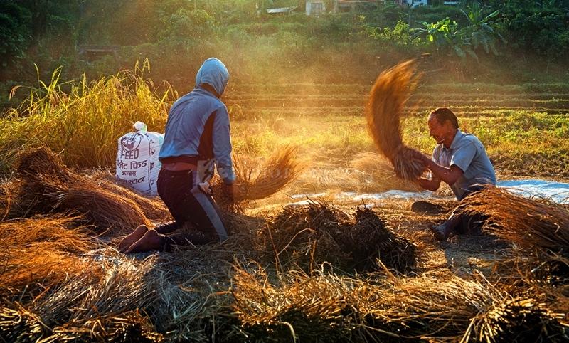 竹节拍客的图片库 - 忙碌的秋天.jpg