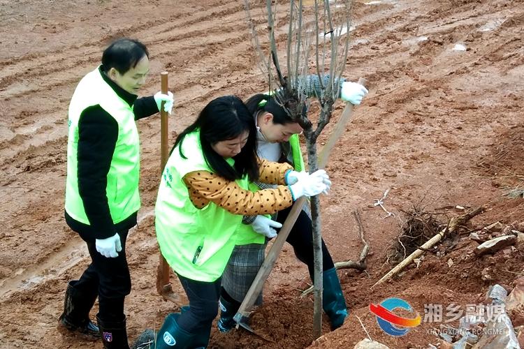 林业局:植树造林 播种希望