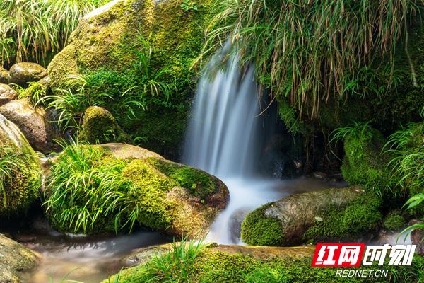 舜皇山群峰耸峙,沟壑纵横,森林茂密,溪水潺潺,水草丛生,绿苔成趣,生物多样,保存有较完整的自然植被与森林生态系统,被誉为南方植物王国和植物基因宝库。.jpg