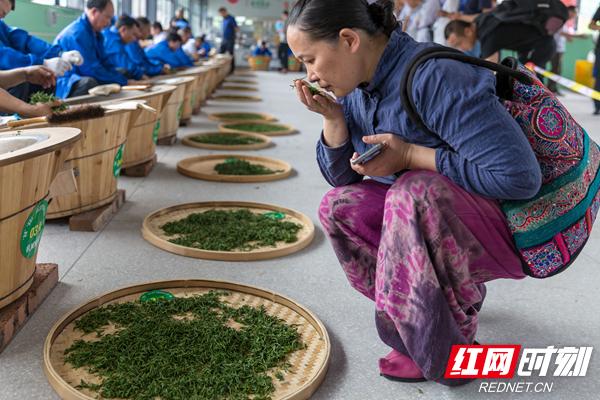5、一名行家里手,通过摸、抓、掂、闻,对簸箕里的茶叶进行品鉴。.jpg