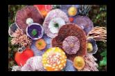 严防有毒野生蘑菇上餐桌进市场:市食安办调研指导乡镇野生毒蘑菇中毒防控工作