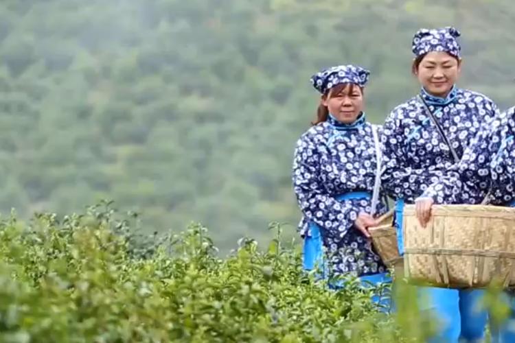 走茶山 觅春茶!是时候去品味湘乡的春天了